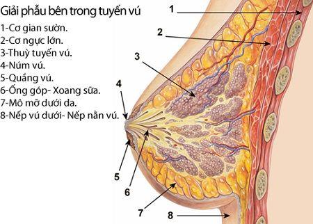 phẫu thuật kéo núm vú tụt có nguy hiểm không 2